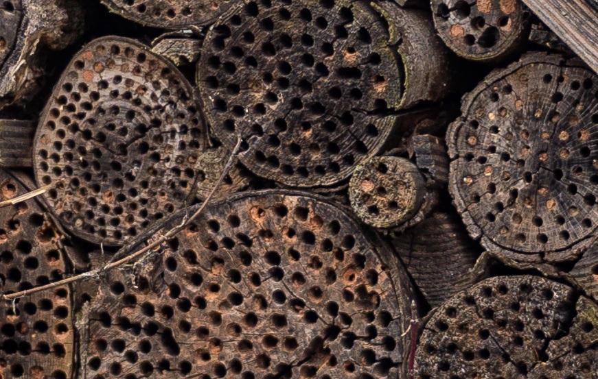Name:  Crop Insektenhotel.jpg Hits: 177 Größe:  256,0 KB