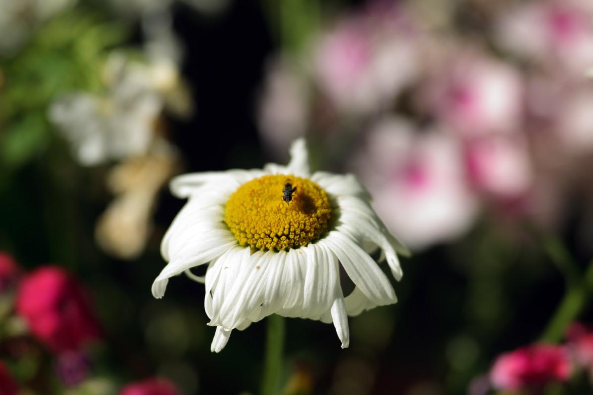 Name:  insekt.jpg Hits: 486 Größe:  117,8 KB
