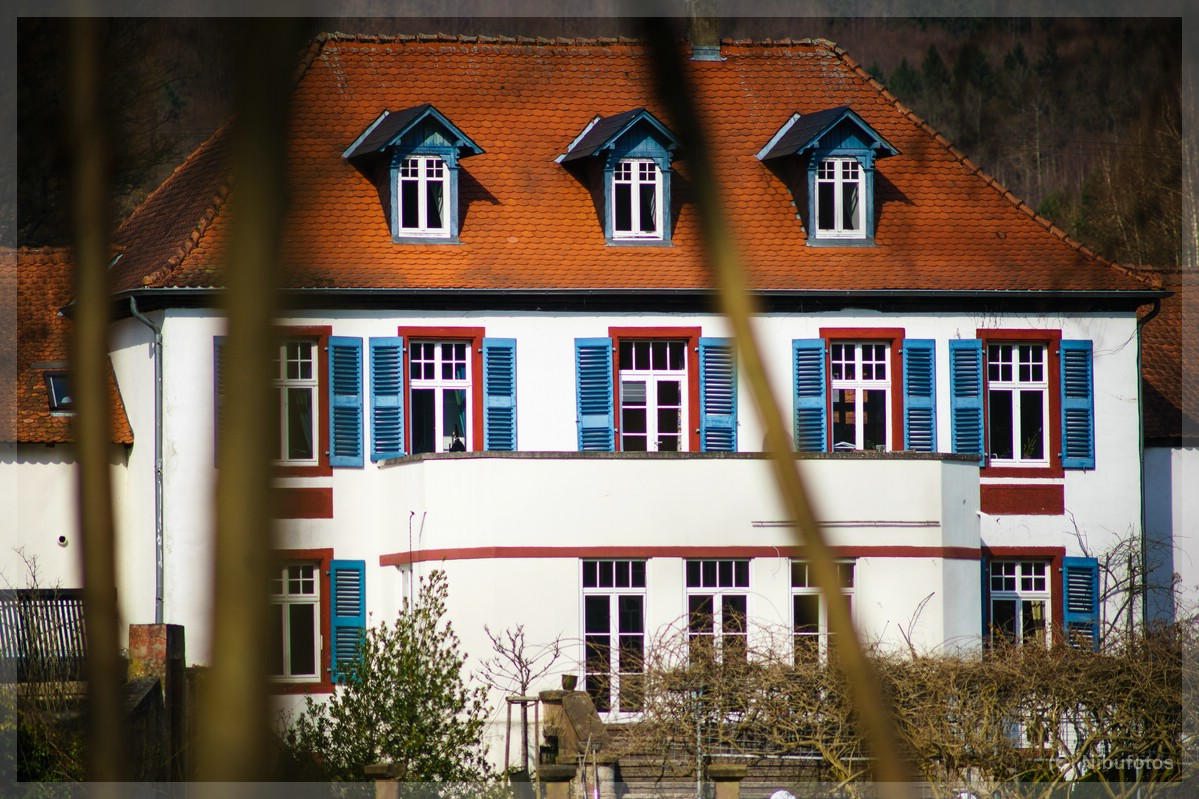 Name:  Niederwürzbacher Weiher 058.jpg Hits: 2004 Größe:  287,9 KB