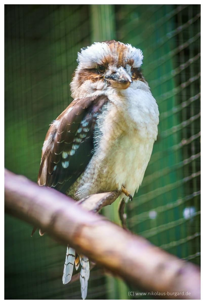 Name:  299kb_Zoo NK Canon FD 300f4, Tokina 60-120 f2.8 051.jpg Hits: 1259 Größe:  269,1 KB