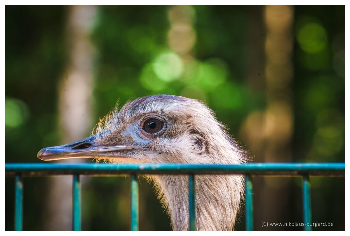 Name:  299kb_Zoo NK Canon FD 300f4, Tokina 60-120 f2.8 070.jpg Hits: 1262 Größe:  285,0 KB