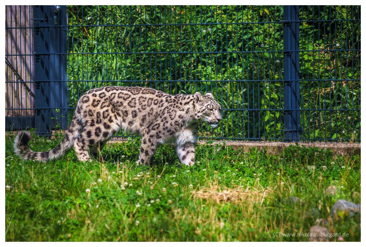 Name:  299kb_Zoo NK Canon FD 300f4, Tokina 60-120 f2.8 089.jpg Hits: 1249 Größe:  292,0 KB