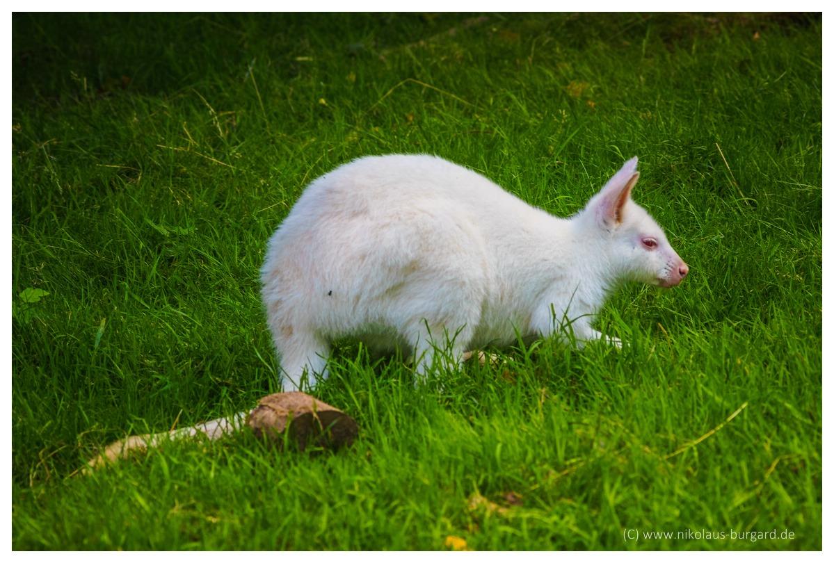 Name:  299kb_Zoo NK Canon FD 300f4, Tokina 60-120 f2.8 063.jpg Hits: 1251 Größe:  287,3 KB