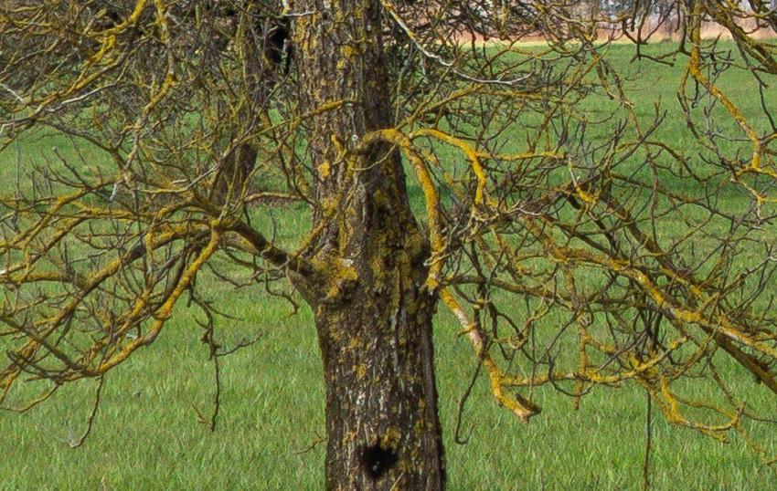 Name:  Cro Baum mittlere Distanz.jpg Hits: 261 Größe:  287,6 KB
