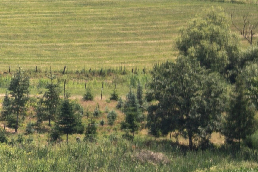 Name:  Crop Landschaft Rand B2.jpg Hits: 38 Größe:  205,3 KB