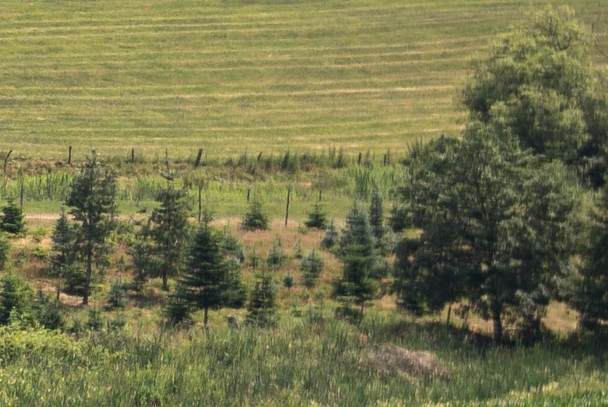 Name:  Crop Landschaft Rand B3.jpg Hits: 38 Größe:  232,7 KB