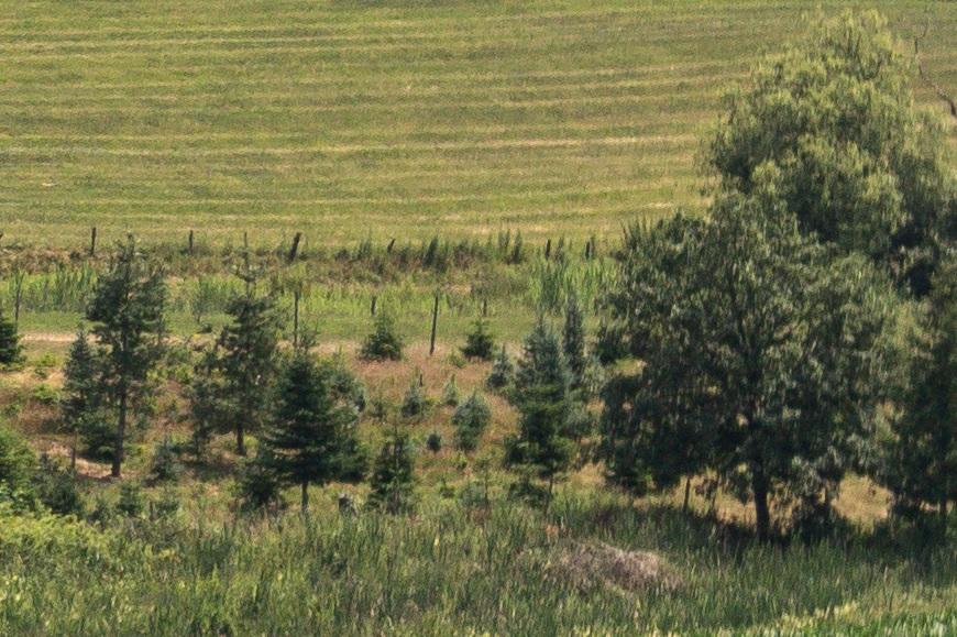 Name:  Crop Landschaft Rand B4.jpg Hits: 29 Größe:  255,2 KB