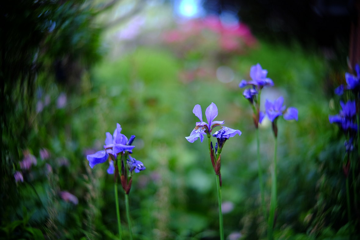 Name:  Garten_3.JPG Hits: 215 Größe:  177,8 KB