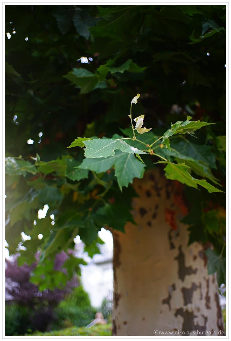 Name:  300kb_7Artisans 35mm f2 Leica 004.jpg Hits: 1689 Größe:  285,0 KB
