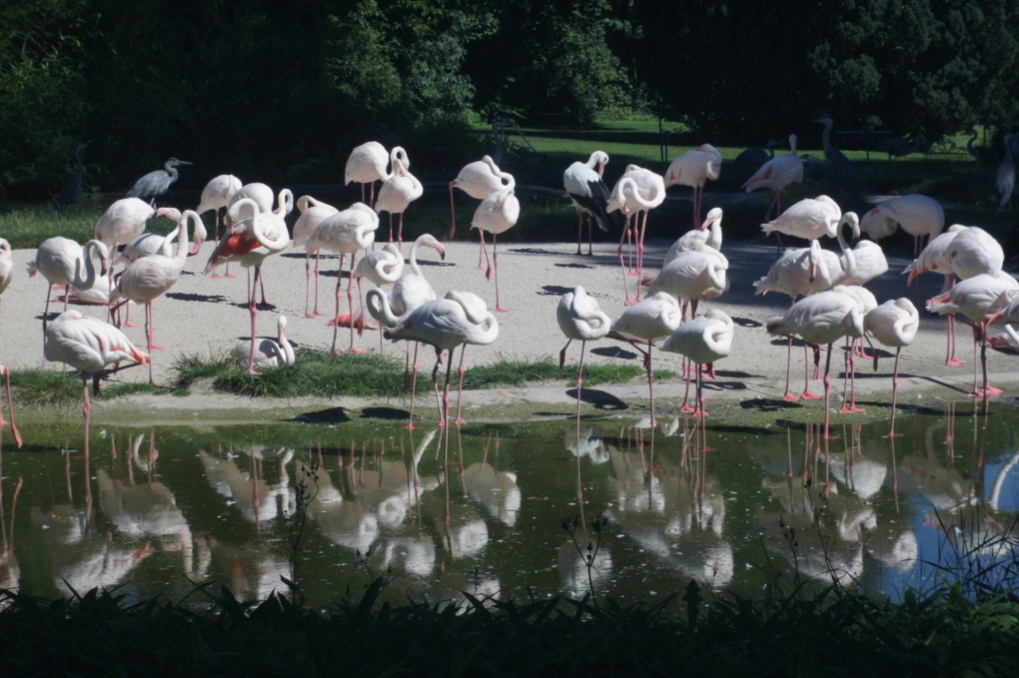Name:  flamingos.jpg Hits: 542 Größe:  231,5 KB