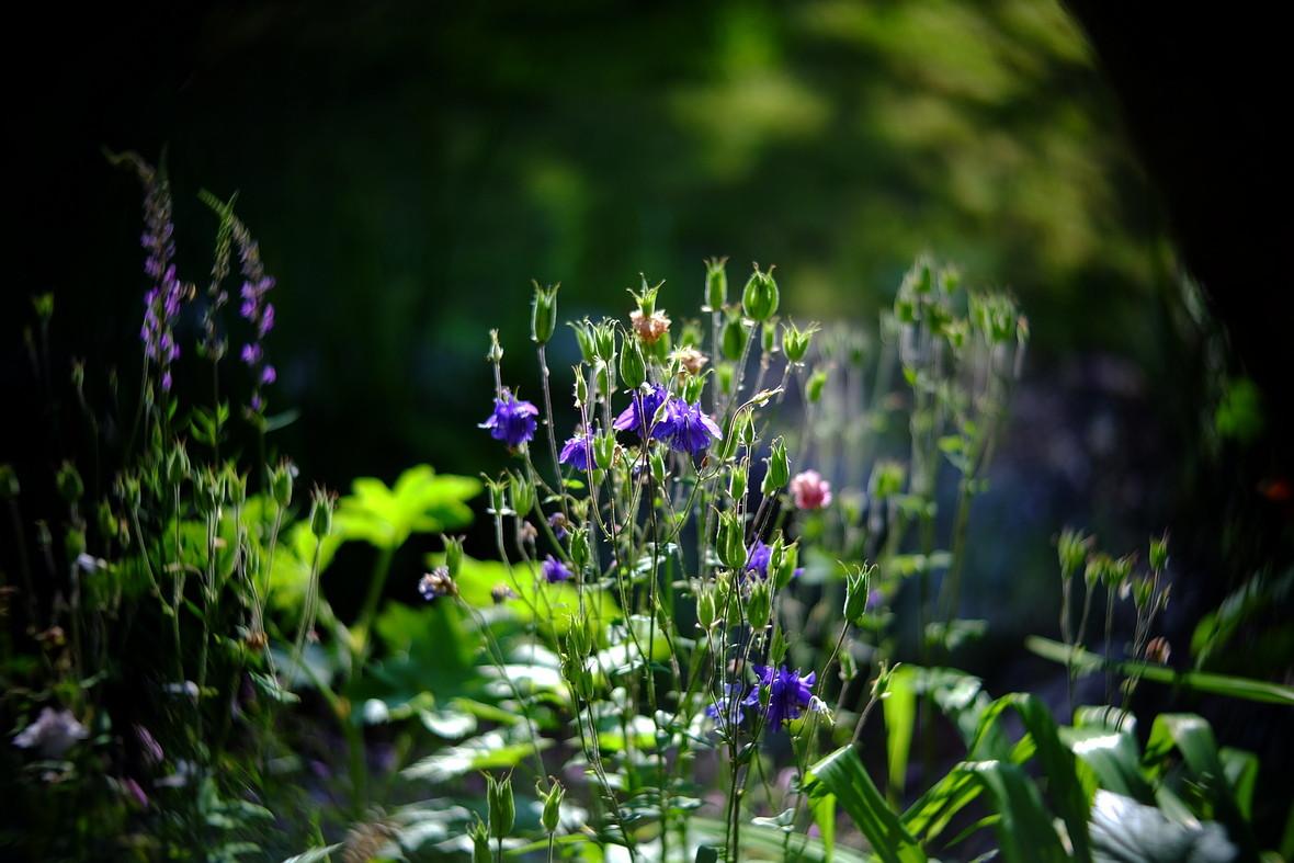 Name:  Garten_1.JPG Hits: 291 Größe:  264,3 KB