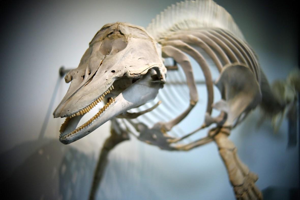 Name:  Skelett_1.jpg Hits: 320 Größe:  126,9 KB