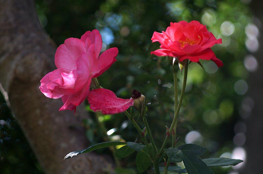Name:  Blumen-01.jpg Hits: 98 Größe:  81,1 KB