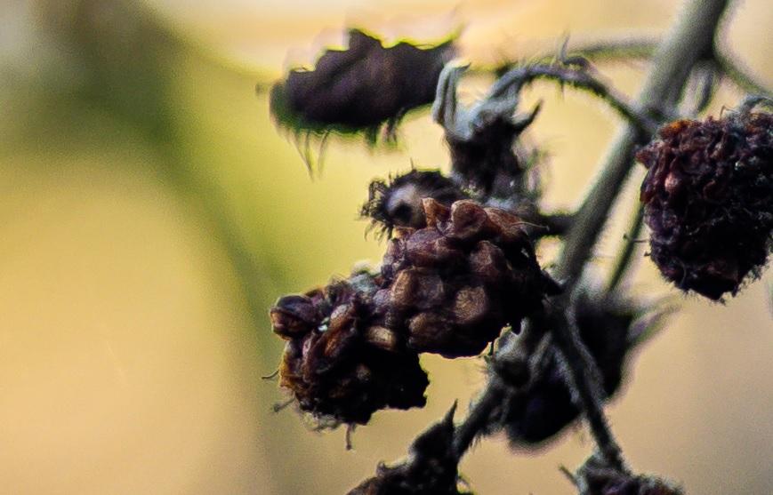 Name:  Crop Beere.jpg Hits: 836 Größe:  145,1 KB
