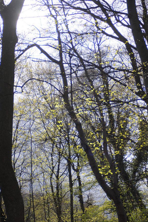Name:  Bäume_1.jpg Hits: 878 Größe:  292,9 KB