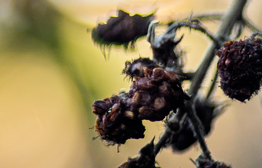 Name:  Crop Beere.jpg Hits: 569 Größe:  145,1 KB