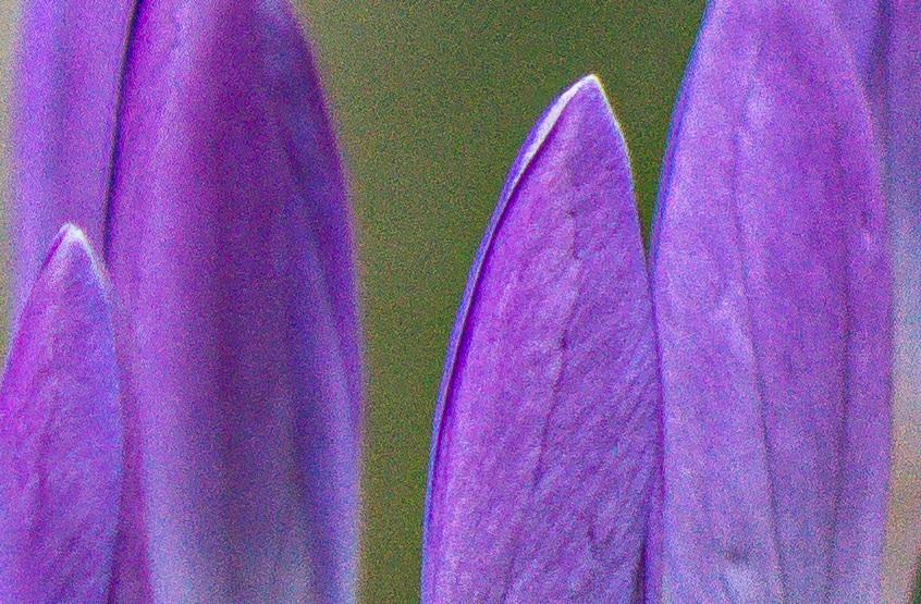 Name:  Crop Blüte.jpg Hits: 184 Größe:  281,9 KB