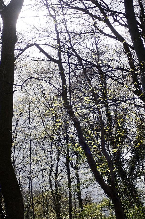 Name:  Bäume_1_DxO.jpg Hits: 941 Größe:  296,0 KB