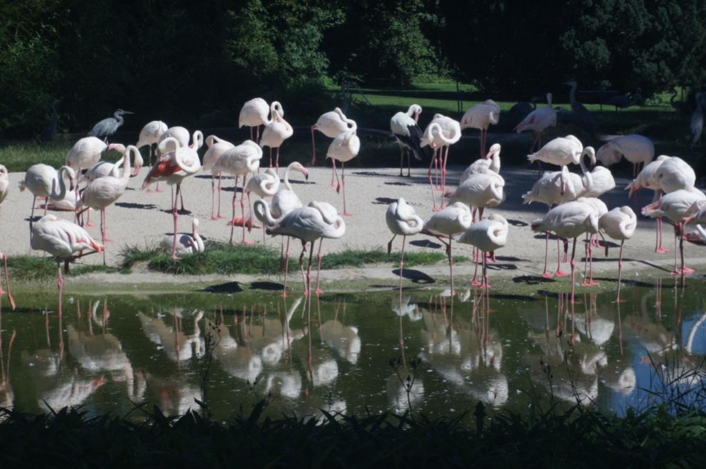 Name:  flamingos.jpg Hits: 534 Größe:  231,5 KB