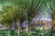 Baumgruppe am Ufer
