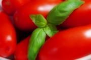 lecker Tomaten ...