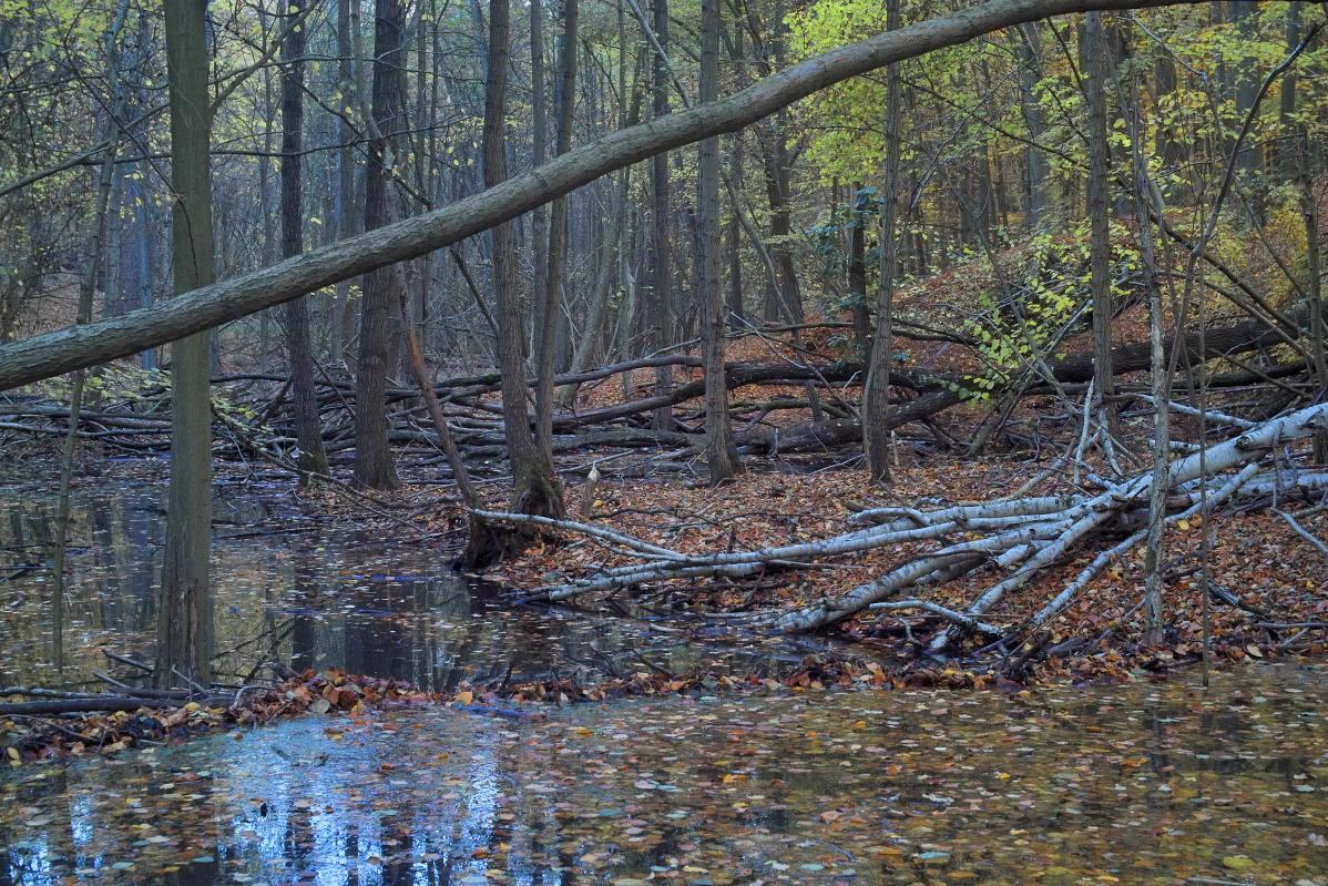 Herbst im Bachtal