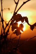 Der Herbst kommt in die Ortenau