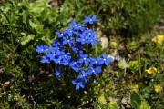 blaues Polster am Griessee