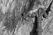 Pfeil im Baum
