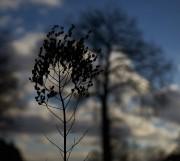 Wenn ich einmal groß bin, möchte ich ein Baum sein