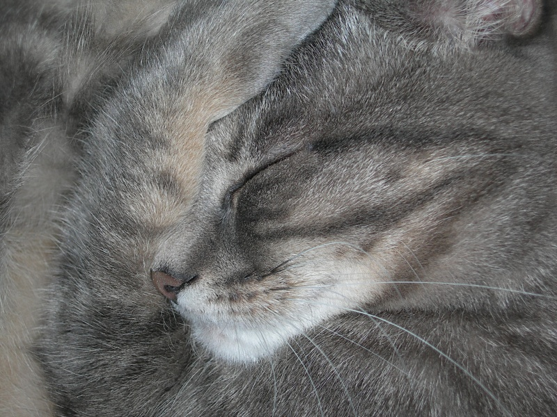 Clara schläft