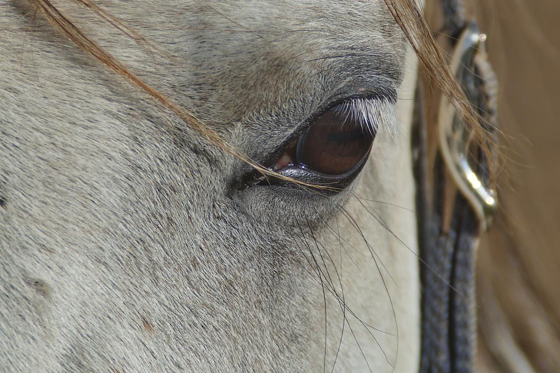 Wirklich schöne Augenbrauen