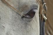 Wirklich schöne Augenbrauen von ulganapi