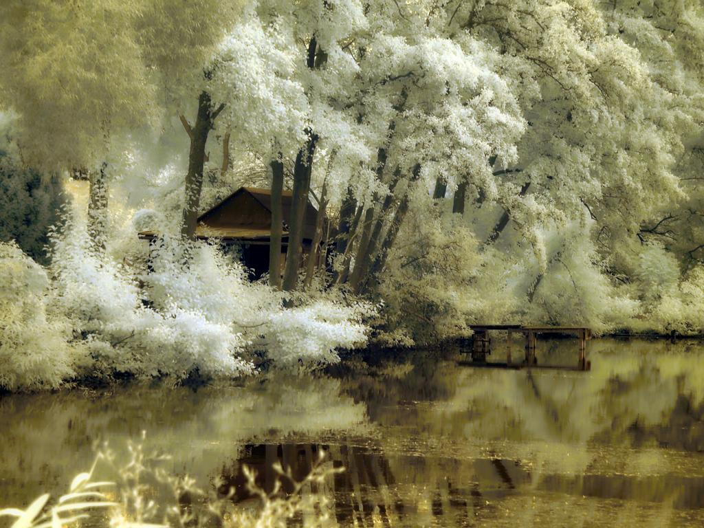 Der Dorfweiher