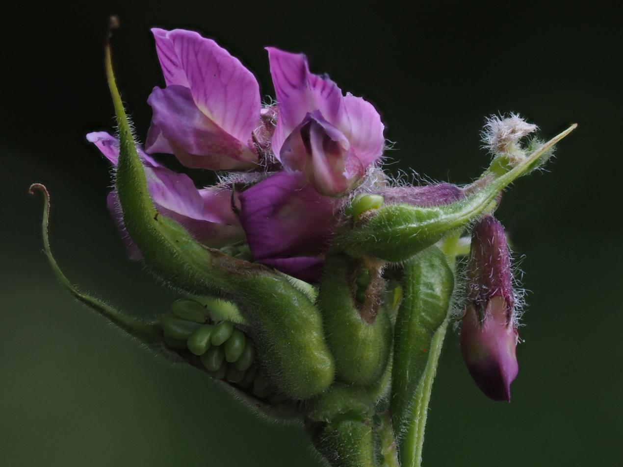 Fantasie-Blüte