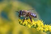 Biene kurz vor dem Start von Bueguzz