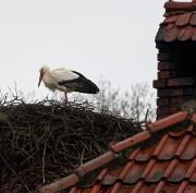 Storch im Februar von Bueguzz