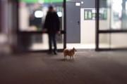 Hund mit Mann von HansDampf