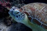 Schildkröte von HansDampf
