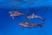 Delfine im Dezember 2016