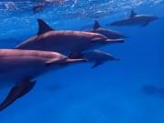 Delfine im Dezember 2