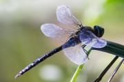 Libelle von PeterWa
