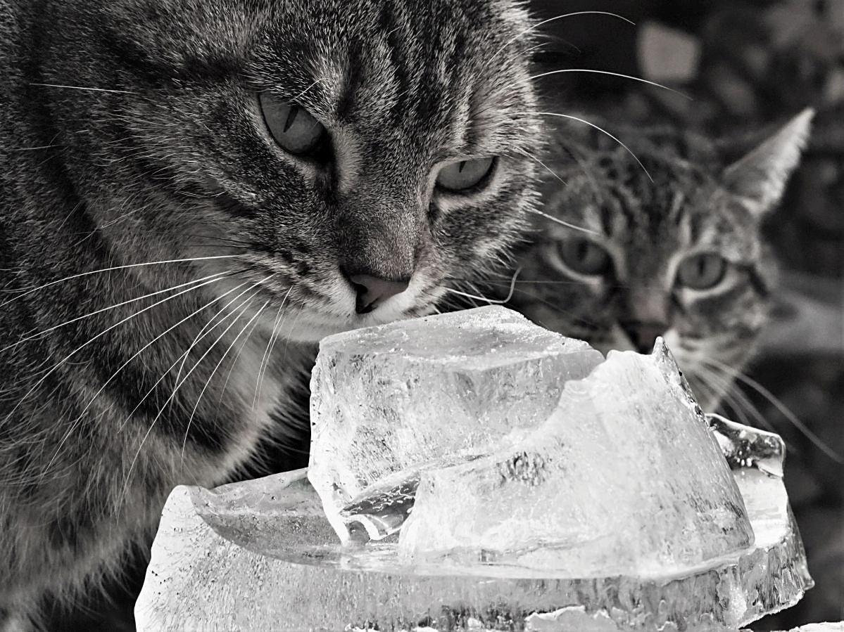 Eiskalte Betrachtungen