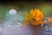 Pfützenspiegel von Blümchenknipser