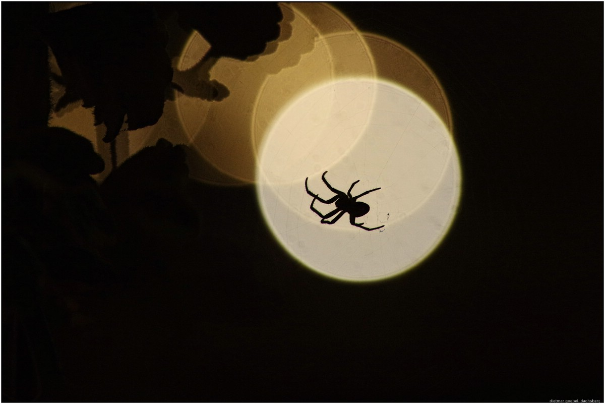 Spinne in der Nacht