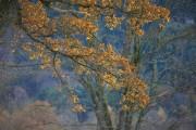 die Farben des Herbstes von gladstone