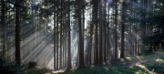 Zauberwald von gladstone