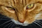 Garfield is watching you! von gladstone