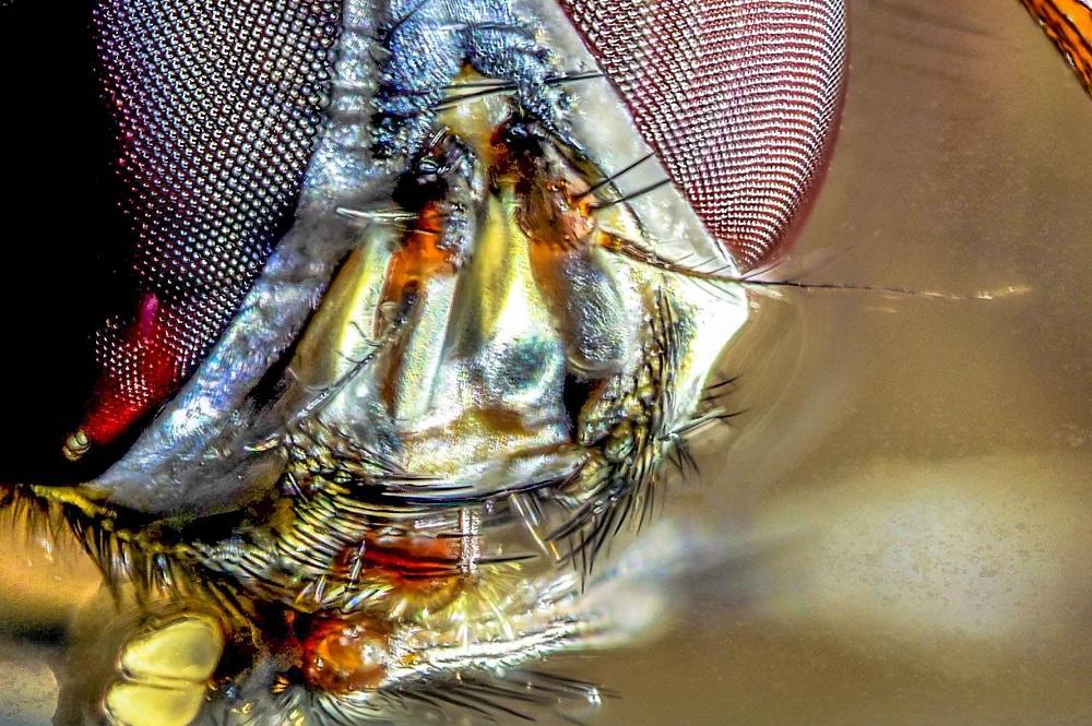 Fliege gestackt