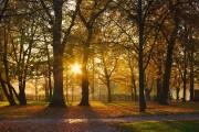 Goldenes Herbstlicht von Hias